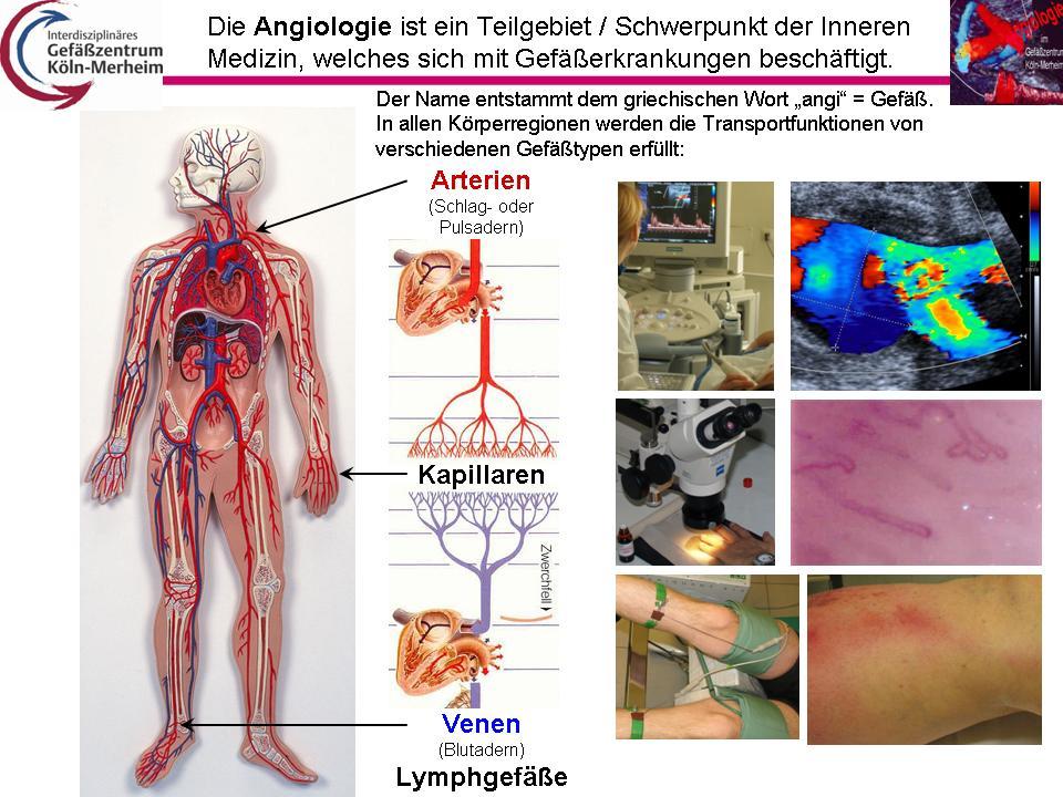 Ausgezeichnet Innere Organ Standorten Zeitgenössisch - Anatomie ...
