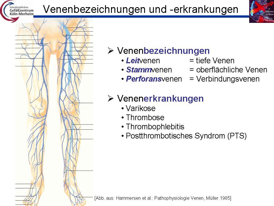 Groß Anatomie Der Venen Im Bein Bilder - Anatomie Ideen - finotti.info